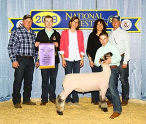 Wise Club Lambs - Winners